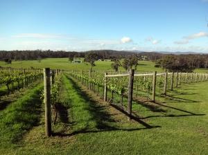 Pretty vineyard; arrogant and awkward vintner