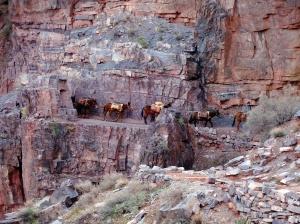 Cowboy Donkeys